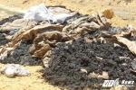 Khởi tố hình sự vụ chôn chất thải Formosa trong trang trại