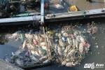 Cá lại chết trắng trên kênh Nhiêu Lộc – Thị Nghè