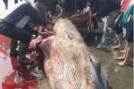 Xôn xao cá voi khổng lồ bị xẻ thịt, máu lênh láng bờ biển