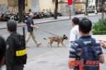Chó 'đặc nhiệm' Mỹ canh chừng cẩn mật cho ông Obama ở TP.HCM
