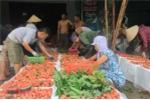 Thương lái Trung Quốc đổ xô mua vải thiều Bắc Giang