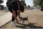 Video: Chàng trai di cư mang cún cưng vượt 500km đi tìm cuộc sống mới