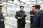 Ông Kim Jong-un tử hình giám đốc công viên vì để rùa chết đói