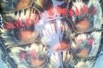 Bắt được rùa biển kỳ lạ khắc chữ trên mai
