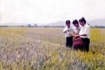 Chủ nhiệm hợp tác xã Nguyễn Bá Thanh và dấu ấn ở Hòa Vang