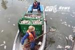 Công bố nguyên nhân hơn 14 tấn cá chết trên kênh Nhiêu Lộc