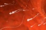 Đi tìm gốc rễ của kỳ tích sinh con không cần tinh trùng chấn động ngành y
