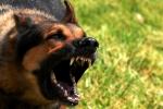 Cận cảnh rượt đuổi, vây bắt chó dại ở Sóc Sơn