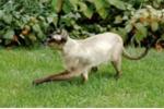 Dùng mèo làm hacker câu trộm wi-fi