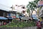 TPHCM: Mưa bất ngờ kèm gió lốc quật ngã cây xanh