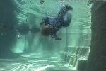 Kỹ năng kỳ diệu cứu mạng trẻ sơ sinh khi bị ngã xuống nước