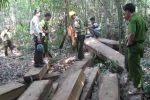 Phá rừng quy mô lớn hoành hành ở Quảng Nam