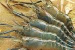 Dân Hà Nội ăn tôm, cua ốc kèm chì, thủy ngân