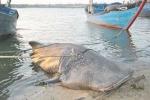 Ngư dân liên tục 'bắt' được các loài cá lạ