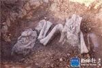 Cận cảnh xương khủng long hóa thạch 180 triệu năm tuổi