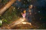 Hai mẹ con bị cây đổ đè chết trong mưa dông