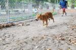 Mở trường đua chó 'độc nhất vô nhị' ở Phú Quốc