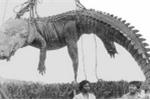 Chuyện trung đoàn biệt kích Nhật bị cá sấu khổng lồ xóa sổ