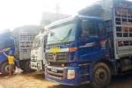 Xe chở lợn ách tắc ở cửa khẩu Trung Quốc; Dây chuyền giết mổ 'bán xới' vì chưa có hồi âm