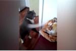 Clip: Mèo nổi điên tát 'chúa sơn lâm' tới tấp