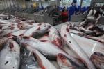 Việt Nam không bán phá giá thủy hải sản vào Hoa Kỳ
