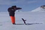 Clip: Chim cánh cụt 'dọa nạt' người đàn ông siêu hài hước