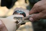 Lính Mỹ khổ luyện với rắn độc ở tập trận Hổ mang vàng
