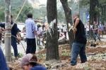 Chủ tịch Hà Nội yêu cầu dừng việc chặt cây xanh