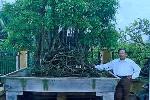 Kinh ngạc với vườn cây trăm tỉ của lão nông dân