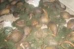 Cảnh sát vây bắt xe chở động vật hoang dã trên QL 1A