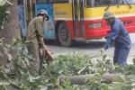Ông Trần Đăng Tuấn viết thư ngỏ: Chủ tịch Hà Nội yêu cầu rà soát việc chặt cây