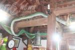 Giải mã rắn lạ được coi là 'xà thần' ở Tuyên Quang