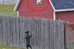 Khó nhịn cười clip mèo 'Ninja' băng rào chạy trốn chó