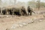 Hàng chục con voi rừng kéo về tàn phá bản làng