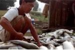 Cá chết hàng loạt trên sông Bưởi: Công ty xả thải tiếp tục nhận án phạt