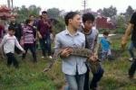 Thông tin bất ngờ về con trăn khổng lồ chui vào mộ ở Hưng Yên