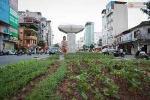 Vườn rau dưới chân đường sắt trên cao giữa Thủ đô