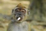 Cười vỡ bụng clip những con khỉ 'bá đạo' nhất quả đất