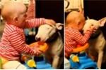 Em bé tát, cào cấu vào mặt con chó khiến người xem rụng tim