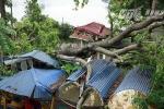 Ảnh: Công viên Thống Nhất hoang tàn sau trận cuồng phong ở Hà Nội
