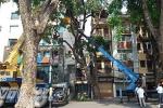 Cuồng phong ở Hà Nội: Xà cừ đổ nghiêng 'doạ' đè sập nhà 4 tầng