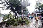 Phố phường Sài Gòn ngập nặng, hàng loạt cây xanh gãy đổ
