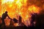 Trung Quốc: Nhiệt độ tăng cao, rừng xanh thành chảo lửa