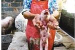 Lợn quái dị 8 chân xuất hiện ở Trung Quốc