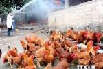 Công điện khẩn về phòng chống dịch cúm gia cầm H5N1