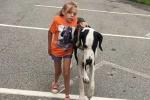 Chú chó 9 năm làm 'đôi chân' của em bé khuyết tật