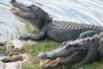 Indonesia dùng cá sấu làm cai ngục canh giữ tội phạm buôn ma túy