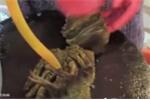 Xôn xao tôm hùm bị cắt đôi vẫn cử động