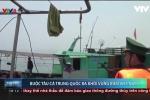 Video cận cảnh biên phòng bắt quả tang tàu cá TQ đánh bắt trộm ở vùng biển thuộc chủ quyền VN