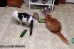 Clip: Phát hiện bất ngờ về 'khắc tinh' của loài mèo